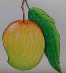 आम के फल का चित्र